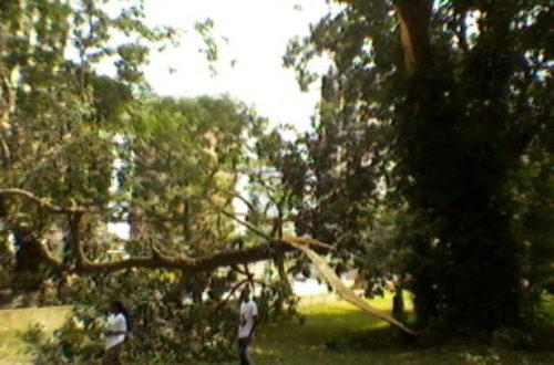 Article : Abidjan, une chasse aux chauves-souris a failli tourner au drame