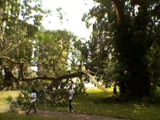 Dans la cours de la Bibliothèque nationale, un tronc d'arbre a crée plus de peur que de mal, récemment, dans la commune du Plateau.